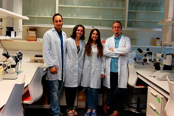 un estudio logra que los globulos blancos alivien el dolor durante la inflamacion de los tejidos en ratones