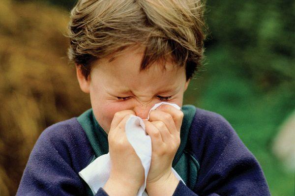 pelargonium sidoides eficaz para combatir el resfriado de los ms pequeos