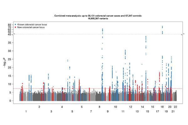 identificadas 40 nuevas variantes geneticas implicadas en la predisposicion al cancer colorrectal