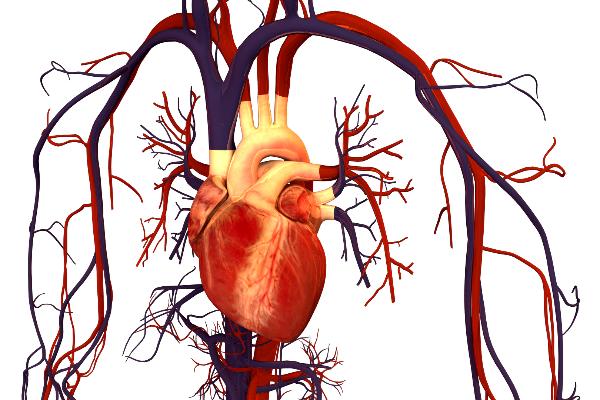 la presin arterial elevada antes de los 40 aos de edad aumenta el riesgo de accidentes cardiovasculares