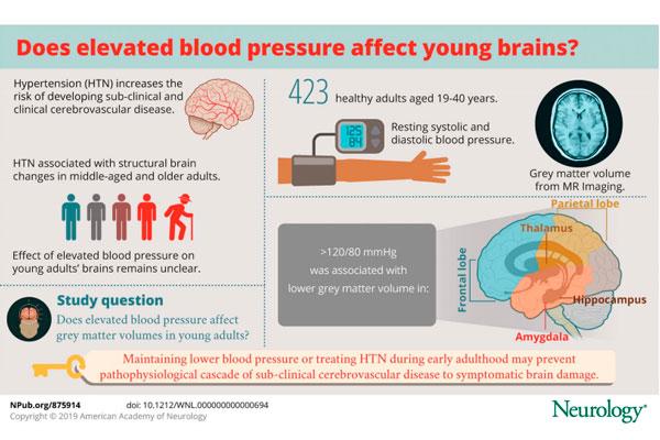 la hipertensin en adultos jvenes provoca alteraciones cerebrales a largo plazo