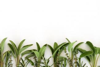salvia-disminuye-la-sudoracion-y-alivia-los-sofocos-de-la-menopausia