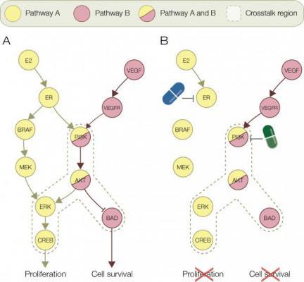 la bioinformaacutetica identifica 10 nuevas combinaciones de faacutermacos para el caacutencer de mama