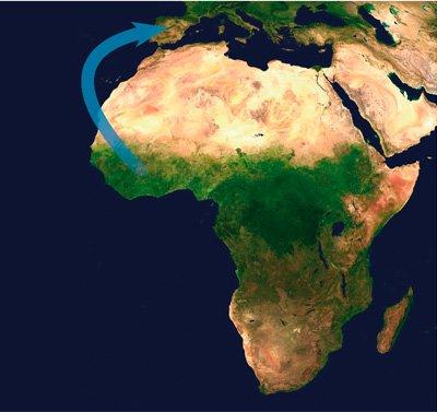 el dia que el ebola salio de africa