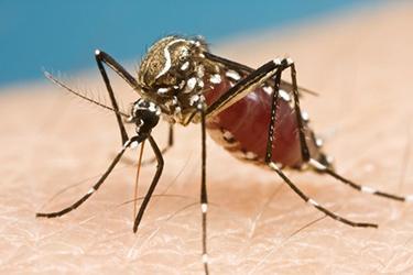 europa debe estar preparada para una epidemia del virus zika