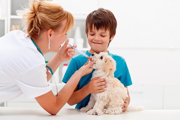 medicamentos veterin