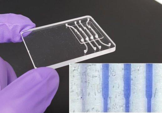 una posible prueba que tan solo cuesta dos doacutelares podriacutea detectar la presencia del zika